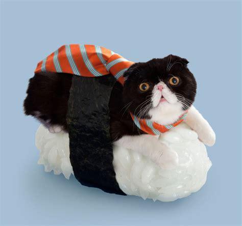 cat wallpaper rolls omg cat fish sushi rolls sushi cats omg blog