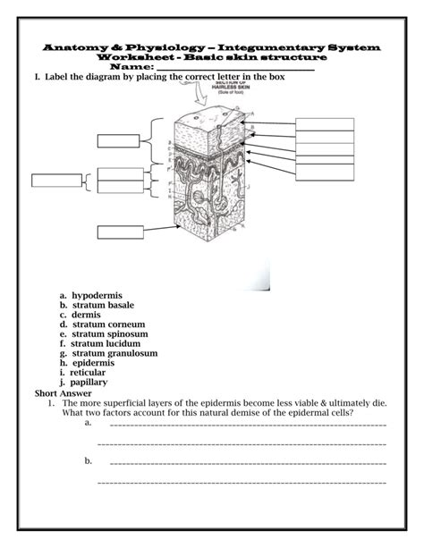 Answer Styledash Help Our Skin All by Integumentary System Diagram Worksheet Worksheets For All