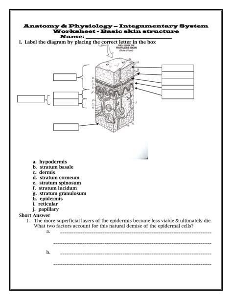 diagram quiz free printable integumentary system skin worksheet