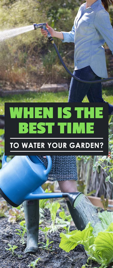When Is The Best Time To Water Your Garden When Is The Best Time To Water My Vegetable Garden