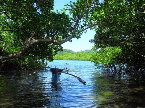 halmahera hijau strategi pengelolaan kawasan hutan