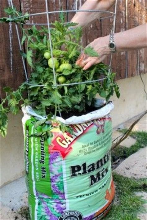 how to grow tomatoes in bags