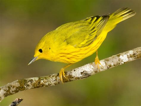 yellow bird beautiful scenery photography