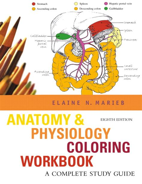 anatomy coloring book pearson marieb anatomy physiology coloring workbook a complete
