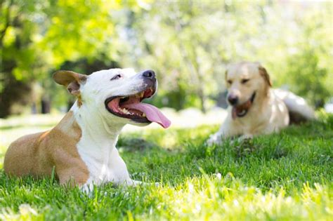 Heat L For Dogs Outside by Indianapolis Makes It Illegal To Keep Dogs Outside In The