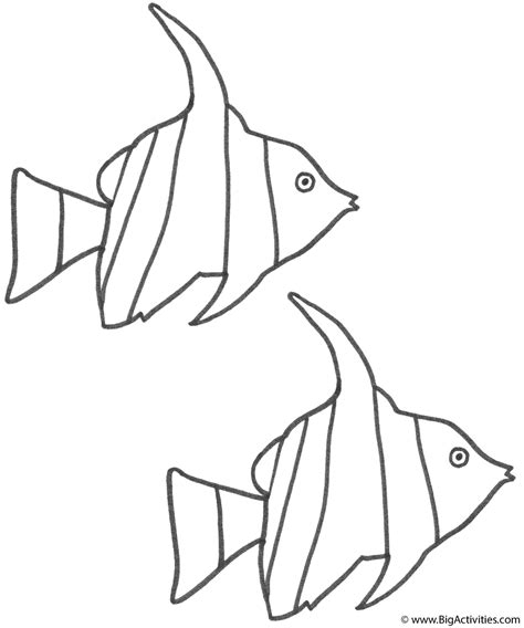 two angel fish coloring page fish