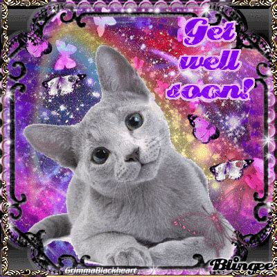 gets kitten get well soon cat gif www pixshark images galleries with a bite
