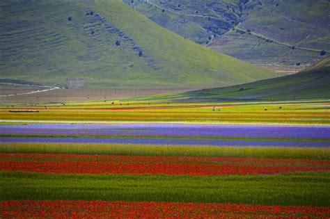 fiorita castelluccio di norcia i trekking le fioriture primaverili di castelluccio
