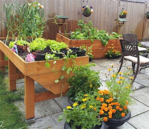 images  container gardening  pinterest