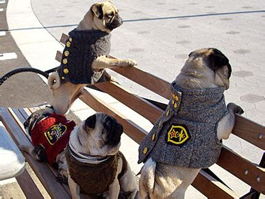 valentino and his pugs valentino s picks the most fashionable pugs vic mackey johnny rotten jeff barkley