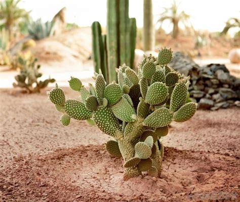 succulents plants adaptations for cactus piante grasse tutto sui cactus