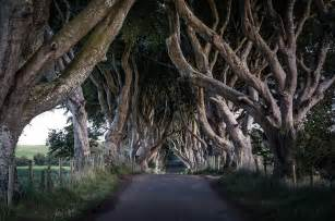 Large Wall Murals the dark hedges of county antrim wall mural the dark