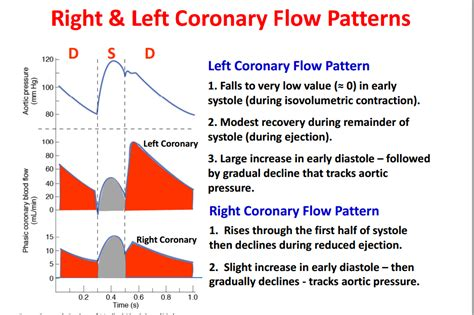 flow pattern definition blood coronary flow at university of texas health science