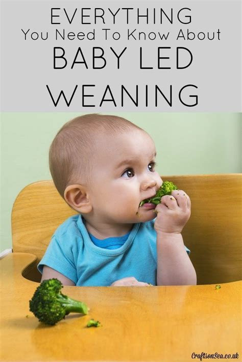 baby led weaning ab wann 1878 best baby images on baby tips baby