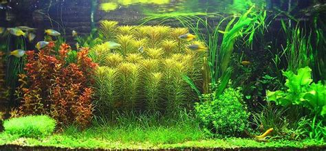 Workmeouttt's Planted Tanks Photo (ID 3752)   Full Version