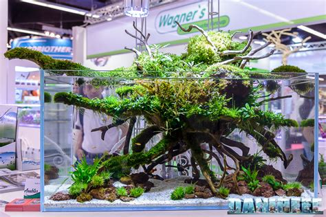 aquascape anubias aquascaping at anubias booth with teknogreen ls during