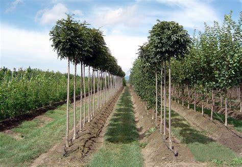 Landscape Supply Longmont Nursery Plants And Trees Thenurseries