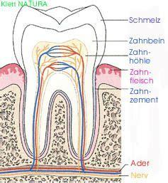 Beschriftung Zahn by Zahnaufbau