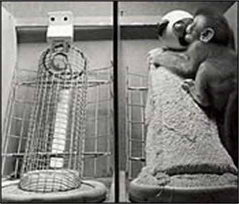contact comfort psychology adoption history harry harlow monkey love experiments