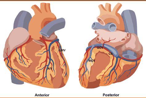 malattie cuore e dei vasi anatomia archivi storia della medicina sito