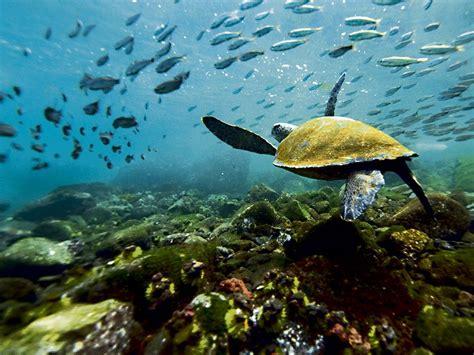 viaja  las islas galapagos  traves de la web el diario