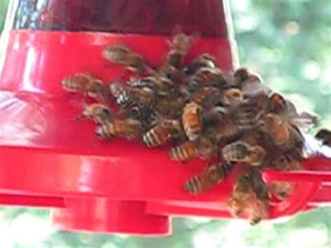 thirsty honey bees on a humming bird feeder youtube