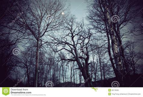 spooky trees stock photo image