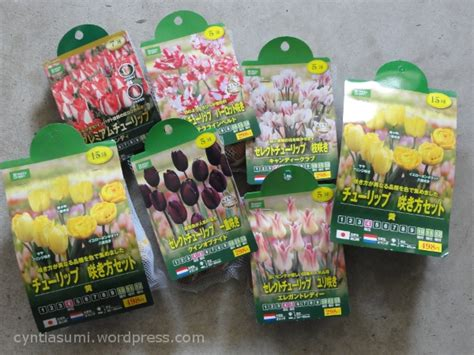 Jual Bibit Bunga Tulip images of my tulip garden for next destiny
