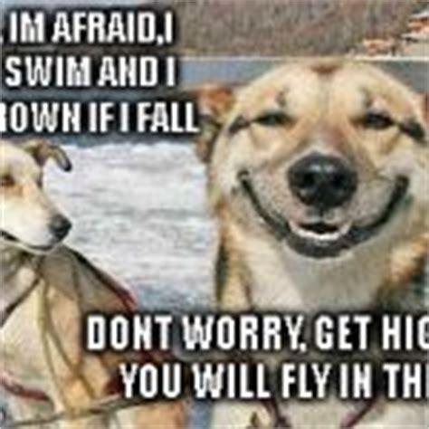 Stoner Dog Meme Generator - original stoner dog meme generator imgflip