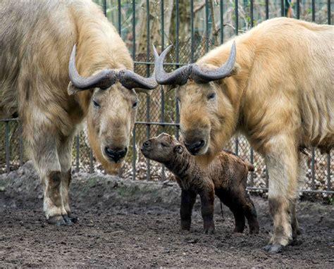 berlin zoo 2014 zoo und tierpark berlin r 252 ckblick auf 2014 und pl 228 ne f 252 r
