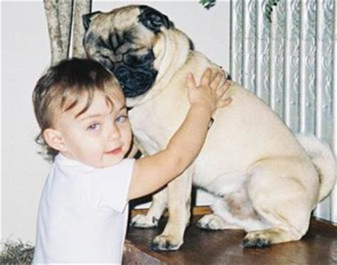 bosley pug la crosse family seeks carnival worker dna testing to find missing pug news