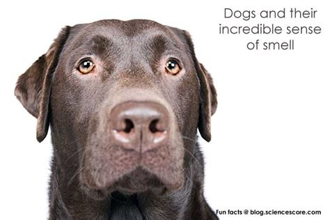 dogs sense of smell science score the world according to dogs