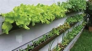 l astuce de jardinier pour prot 233 ger votre potager des lapins