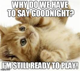Goodnight Meme Cute - image tagged in cute cats animals imgflip
