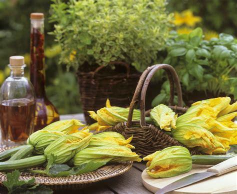 come cucinare i fiori di zucchine come cucinare i fiori di zucca sale pepe