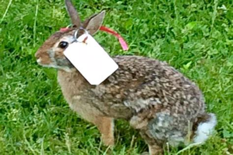 mutilated bunnies in lincoln square state is