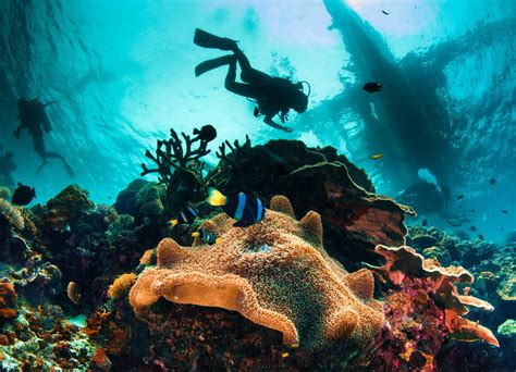 best place to dive 12 best places to scuba dive in florida key largo miami