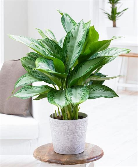 plants that don t need a lot of sun 10 houseplants that don t need sunlight leedy interiors