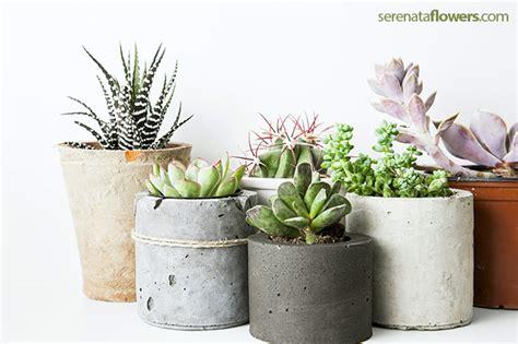 best plants for indoors 5 best low maintenance indoor plants