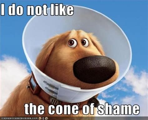 Cone Of Shame Meme - cone of shame know your meme
