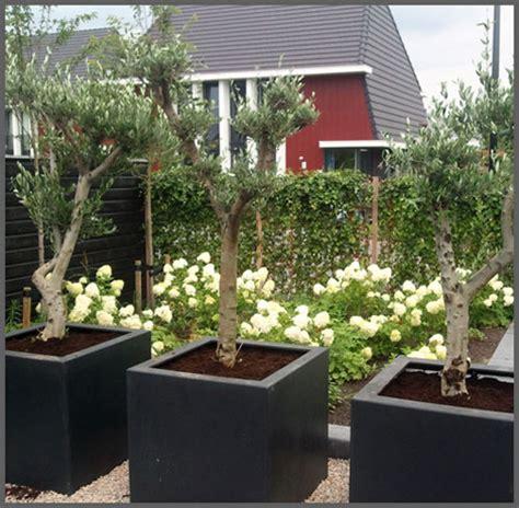 Bomen In Pot Op Terras by Top Bomen In Pot Op Terras Tn17 Belbin Info