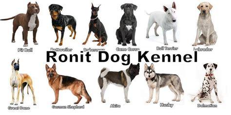 dog breeds pictures  jpg animal list