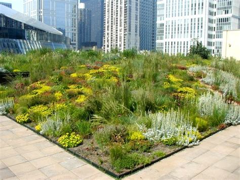design guidelines green roofs biologyplants green roofs the environment