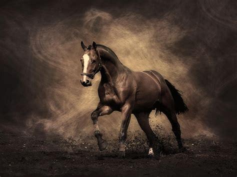 wallpapers hd fondos de pantalla de caballos varias animales caballo wallpaper hd fondos de pantalla gratis