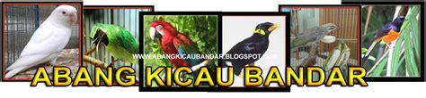 Harga Pakan Burung Nuri abang kicau bandar daftar harga burung nuri terbaru 2017