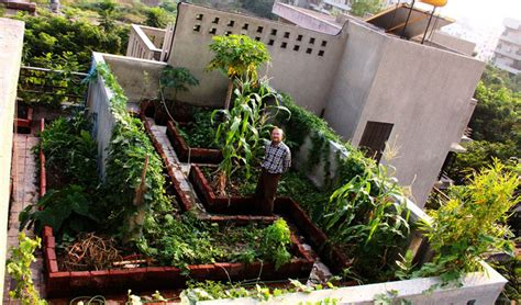 india green roofing    trend  bangalorites
