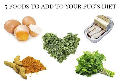 best food to feed pugs best food for pugs recipes food