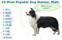 top 10 most popular dog names image gallery hunting dog names