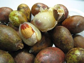 Jual Keranjang Lengkeng Surabaya agen acemaxs surabaya manis legit kaya manfaat buah matoa namanya