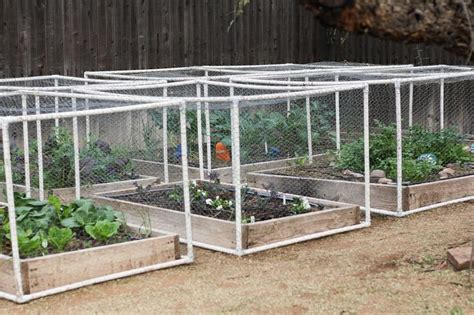 Garden Protection by Using Pvc Frames And Shade Cloth Chicken Wire To Protect